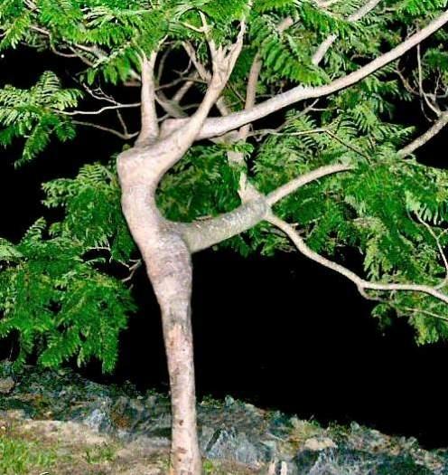 http://www.youtubetranslations.gr/images/news/79212050_dancin-tree.jpg